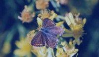 Butterfly from Greece
