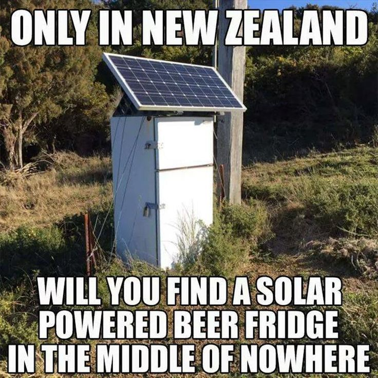 Only in New Zealand, kids, only in New Zealand.