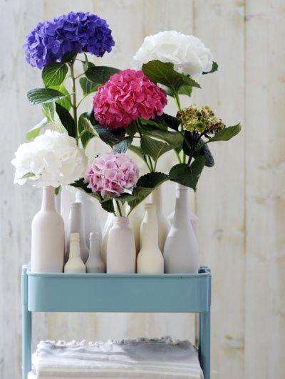 Hortensia's in verschillende kleuren