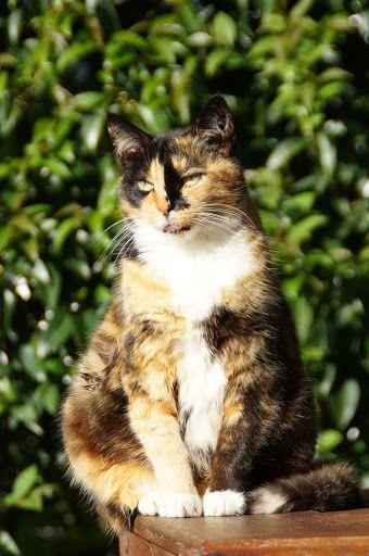 Milly the cat enjoying the Sun.