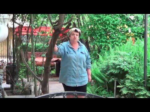 Вишня. Как Значительно Повысить Урожайность Вишен. Секреты Садоводства - YouTube