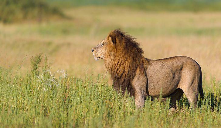 Duba Plains – Clash of the Titans | Photographic Tours Africa | Africa Photographic Safaris | Photography Tours