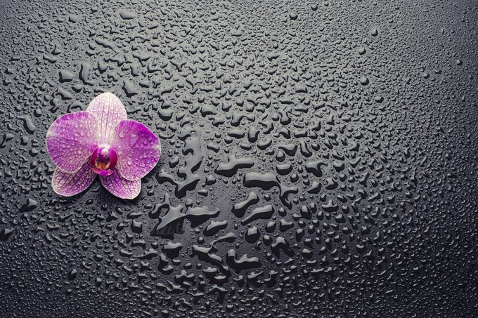 orchid on a black background by NikSorl on Creative Market