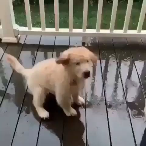Thirsty pup loves the rain 😍😍
