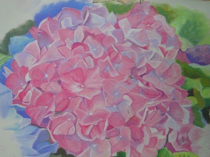 Pink hydrangea original pastel drawing by Tracey Hall