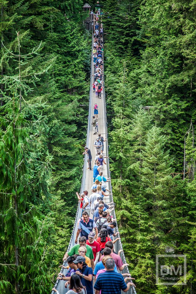 13 best tourist attractions in vancouver images on pinterest cynn canyon park and capilano suspension bridge tourist attractions in vancouver island canada publicscrutiny Image collections