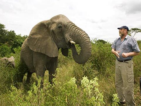 """A good man died suddenly,"""" says Rabbi Leila Gal Berner, Ph.D., """"and from miles and miles away, two herds of elephants, sensing that they had lost a beloved human friend, moved in a solemn, almost 'funereal' procession to make a call on the bereaved family at the deceased man's home. A man's heart's stops, and hundreds of elephants' hearts are grieving. This man's oh-so-abundantly loving heart offered healing to these elephants, and now, they came to pay loving homage to their friend."""