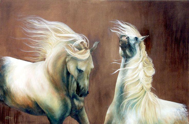 cavalli - olio