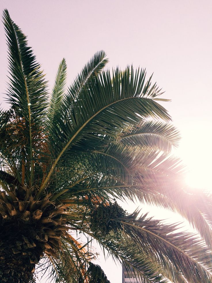 entracing palm tree type house plant. Palmtree sun happiness 47 best PALM TREE images on Pinterest  Palm trees Palms and Palmas