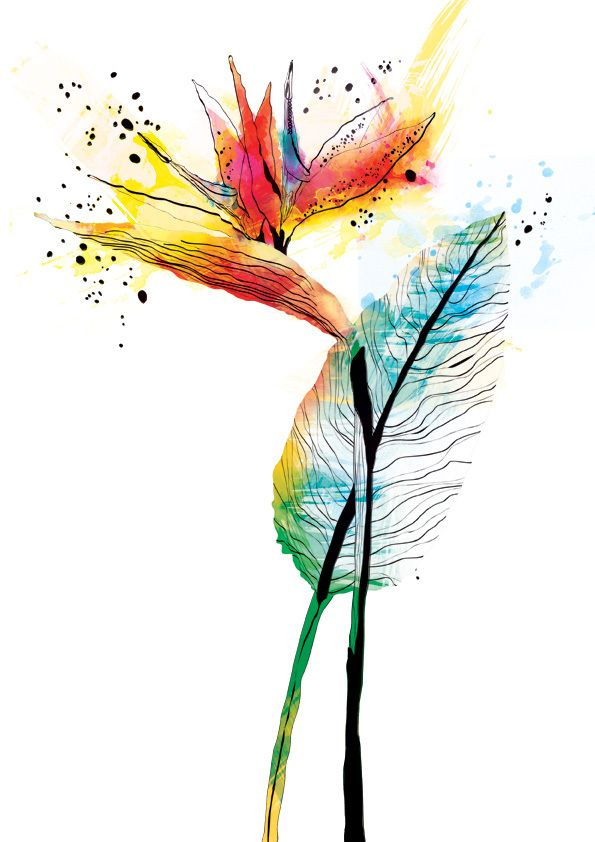Watercolour and inks by Ella Tjader, via Behance