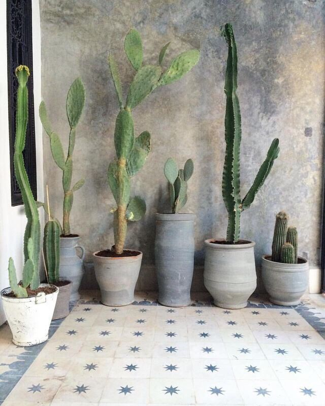 concrete and raw clay planter on pretty tiles and even prettier wall