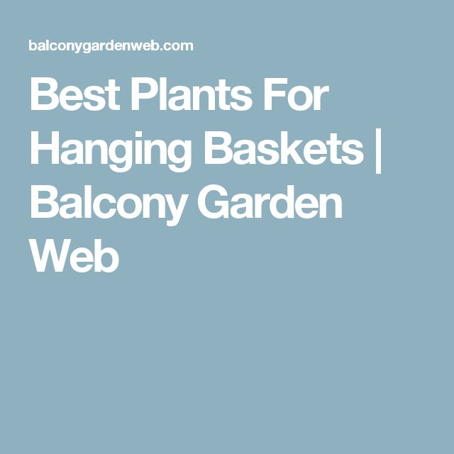 Best Plants For Hanging Baskets | Balcony Garden Web