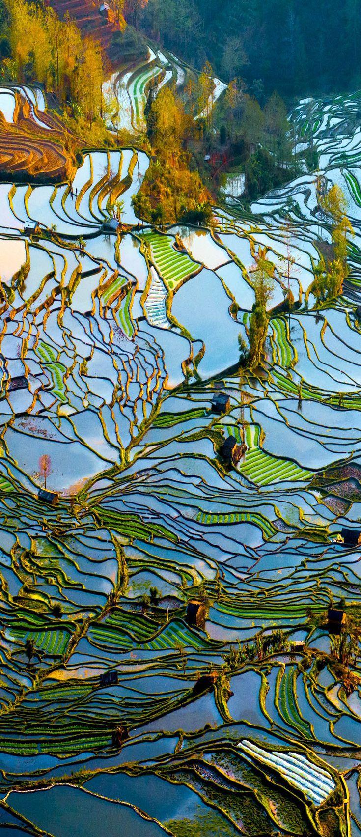 Rice Terrace Field in Water Season - Yuan Yang | China