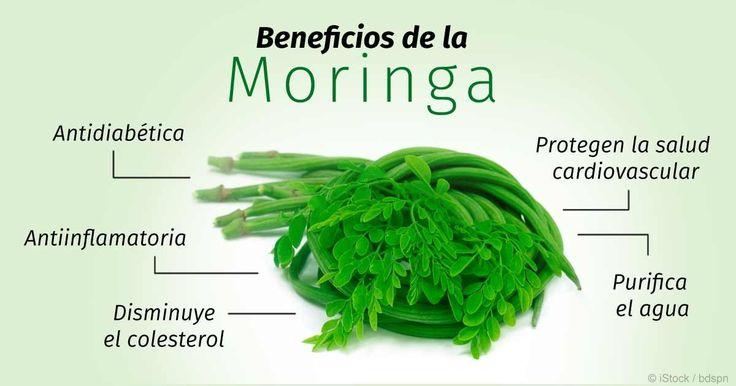 La moringa tiene propiedades para bajar el colesterol, antidiabéticas, antiinflamatorias, cardio protectoras y está lleno de vitaminas, minerales y antioxidantes. http://articulos.mercola.com/sitios/articulos/archivo/2015/09/06/los-beneficios-de-la-moringa.aspx