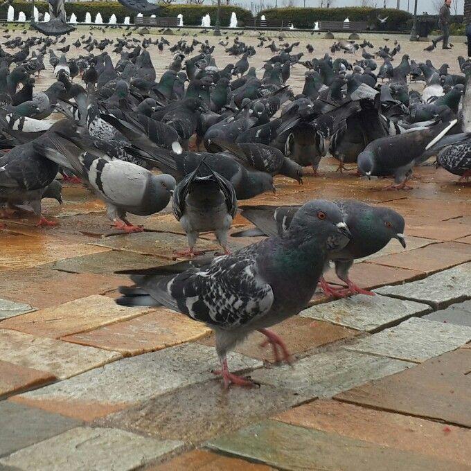 Izmir konak kuşlar