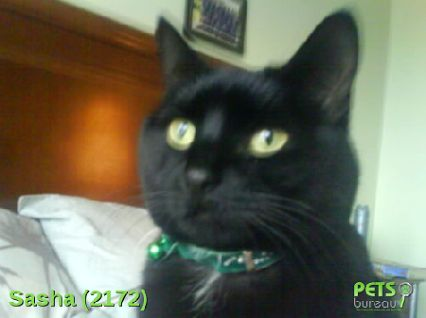 Please help us find Sasha the Cat missing in the br35bd area. For more details click http://j.mp/112crQ6