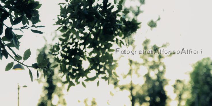 Un filtro di Luce - Fotografia : Alfonso Alfieri for Viewproduction