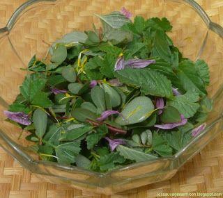 Les 25 meilleures id es concernant pourpier fleur sur for Entretien salade jardin
