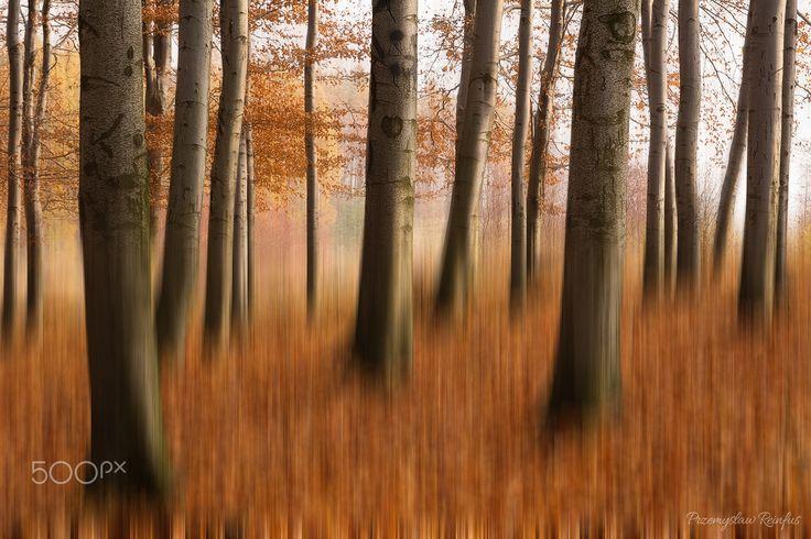 Autumn forest - null