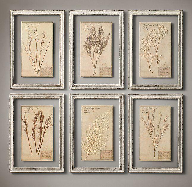 19th C. Framed Herbariums Ivory (Set of 6)