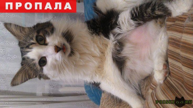 Пропал кот г.Красноярск http://poiskzoo.ru/board/read31230.html  POISKZOO.RU/31230 .. октября потерялся кот! Копыловский мост, возле дома Менжинского .., если кто увидит его, сообщите пожалуйста мне ..., ... Нашедшему вознаграждение!   РЕПОСТ! @POISKZOO2 #POISKZOO.RU #Пропала #кошка #Пропала_кошка #ПропалаКошка #Красноярск