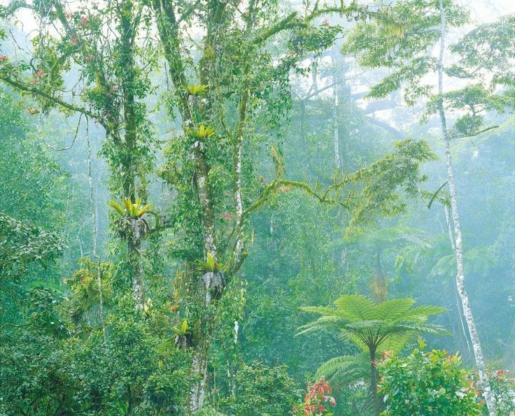 Queensland rainforest tropical north queensland for Australian rainforest