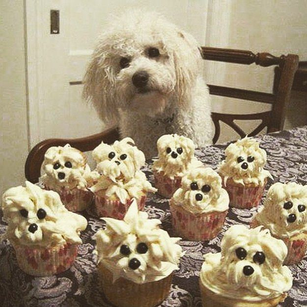 I know this is a bit different to my normal posts but oh it made me smile this morning! Regram from @nataliebklein #cupcakes #dogmuffins #baking #lookalikes #dogsofinstagram