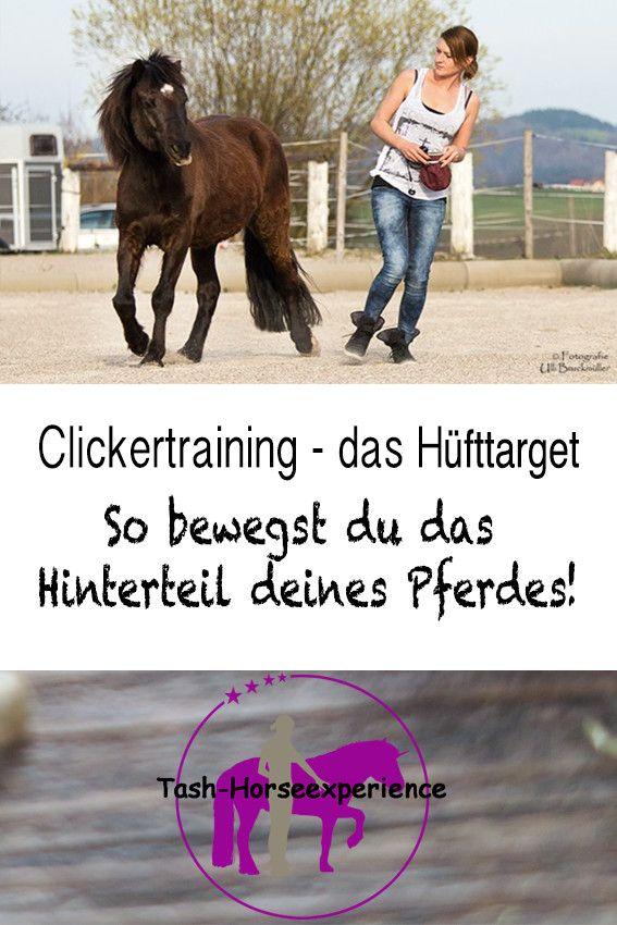 Clickertraining: So lernt dein Pferd auf ein Target zu reagieren - das Hüfttarget