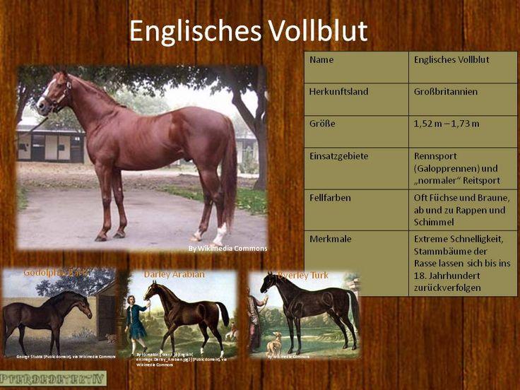 Pferderasse Englisches Vollblut