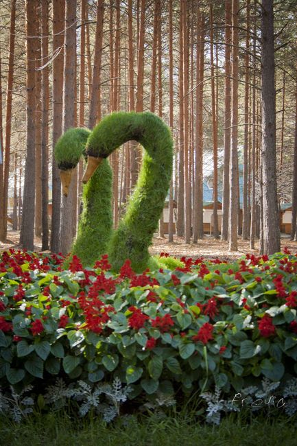 206 best topiary sculptures images on pinterest garden art topiaries and gardening for A b lawn and garden