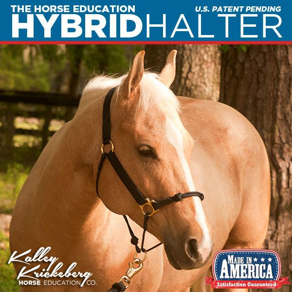 The Horse Education Patent Pending Hybrid Halter combines the best features of web and rope halters, plus unique features for training effectiveness