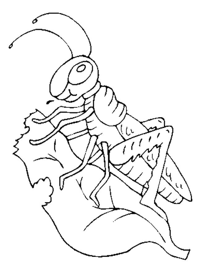 18 best Grasshopper Coloring Pages images on Pinterest | Children ...