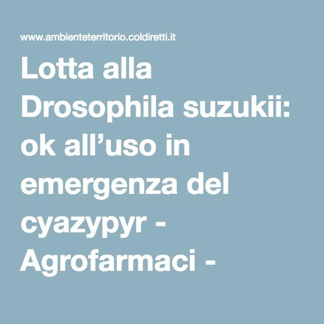Lotta alla Drosophila suzukii: ok all'uso in emergenza del cyazypyr - Agrofarmaci - Ambiente e Territorio