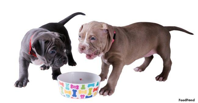 20 Best Dog Foods For Labradoodle In 2019 Best Dog Food Dog