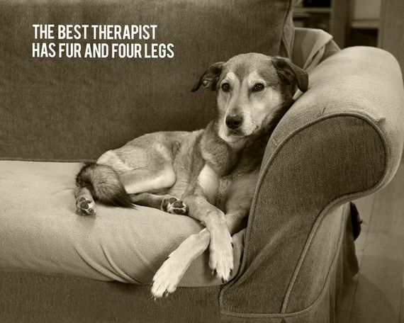 My therapist has fur, four legs and solves all my problems!