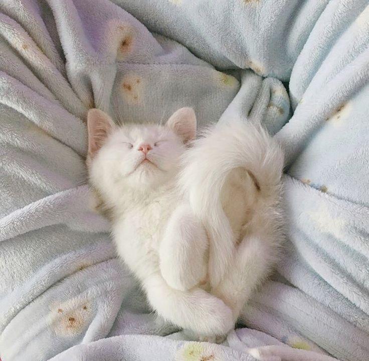 школьница начала картинки кошек на аву спят раздел сюжетной