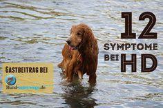 Die 12 wichtigsten Anzeichen bei Hüftdysplasie – erschienen bei hund-unterwegs.de