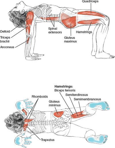 Chatus Pada Pitham Four-Footed Tabletop Pose © Leslie Kaminoff's Yoga Anatomy B E N E F I T S — Strengthens wrists, arms and shoulder...