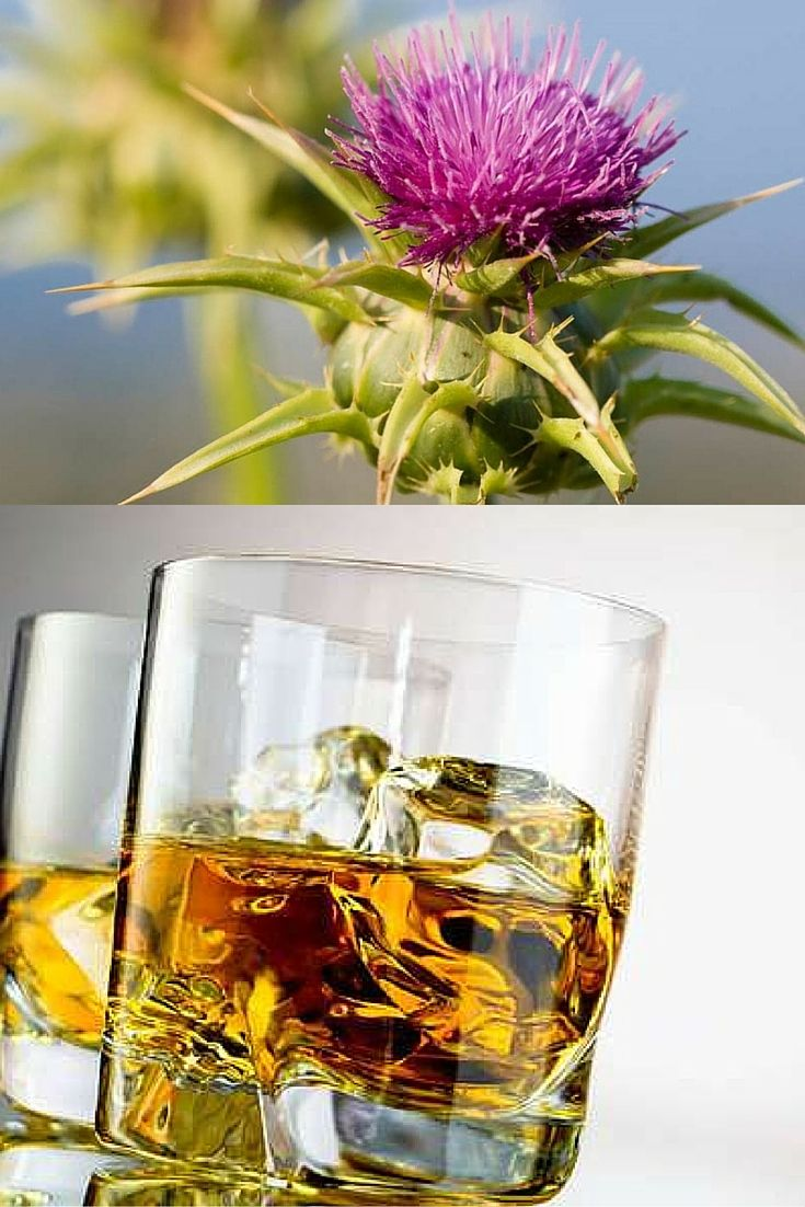 Does milk thistle really prevent hangovers?