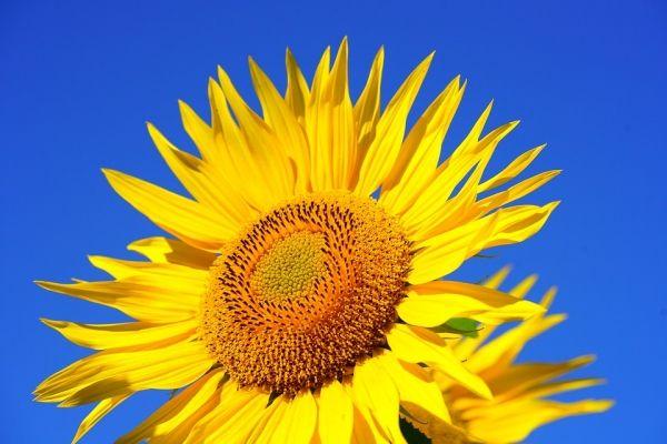 Kenroy Solar Fountains Organic Gardening Tips Organic Gardening Bloom Blossom