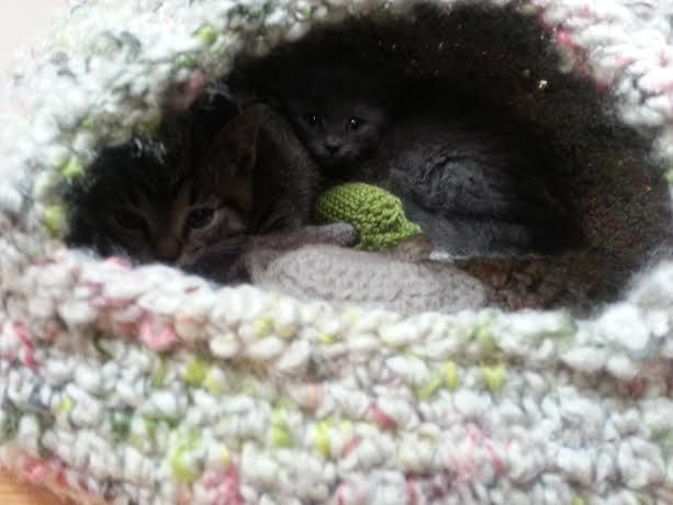 Cat Cave Crochet Pattern Release – Knot By Gran'ma