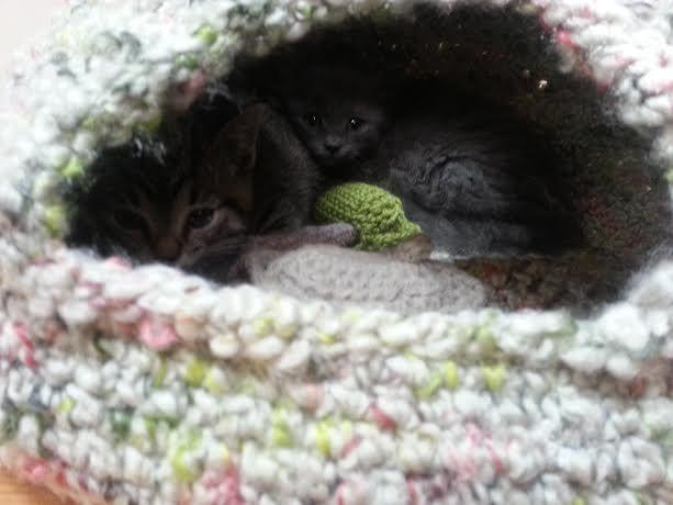 Cat Cave Crochet Pattern Release – Knot By Gran'ma