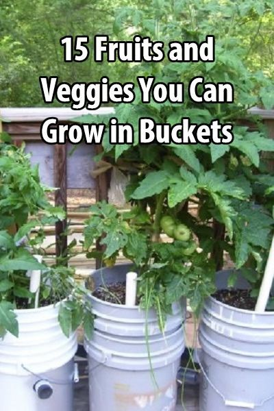 15 Fruits And Veggies You Can Grow In Buckets.  May need to try this thanks to some pesky ground hogs...
