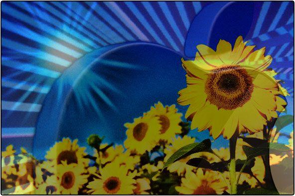 De zonnebloem die jouw iPhone oplaadt.  Deze zonnebloem zonnelader biedt Flower Power!  Het brengt zonne-energie met een glimlach op jouw bureau. De 2500MAh oplaadbare lithiumaccu is krachtig genoeg om eenvoudig je mobiele telefoon of MP3speler op te laden. De solar oplader heeft een USB-uitgang en mini-USB-ingang.    http://www.nerds.nu/de-zonnebloem-die-jouw-iphone-oplaadt/