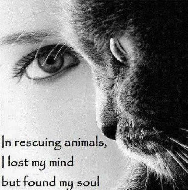 in rescuing animals i lost my mind but found my soul tattoo ideas pinterest paw print. Black Bedroom Furniture Sets. Home Design Ideas