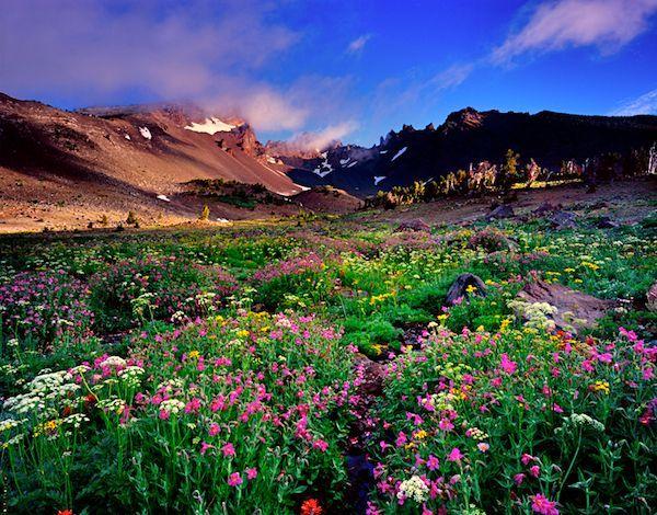 Pacific Crest Trail Oregon | pacific crest trail oregon - Google Search