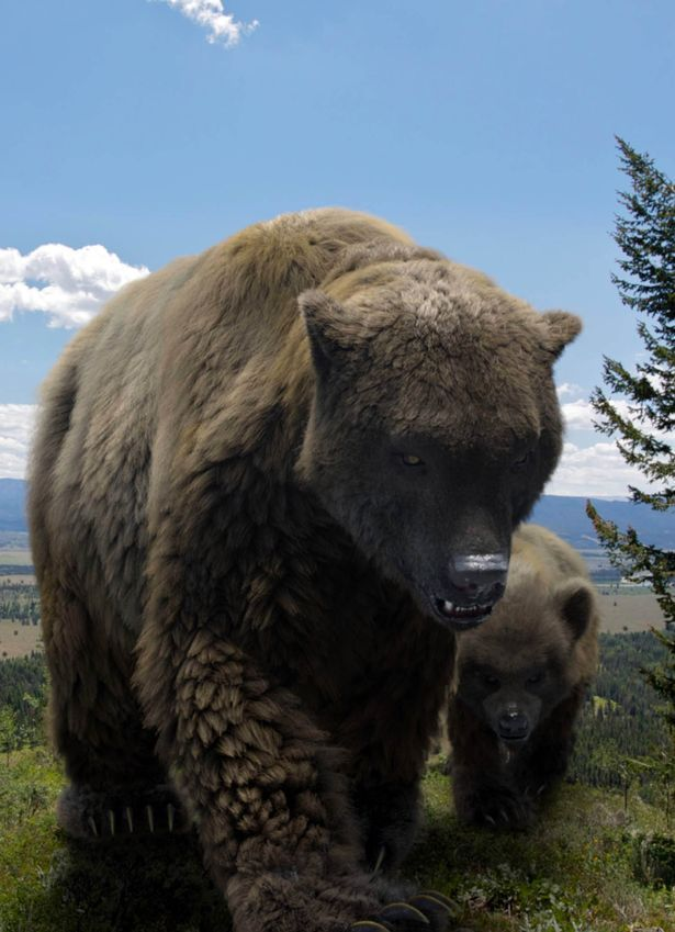 A European cave bear and its cub