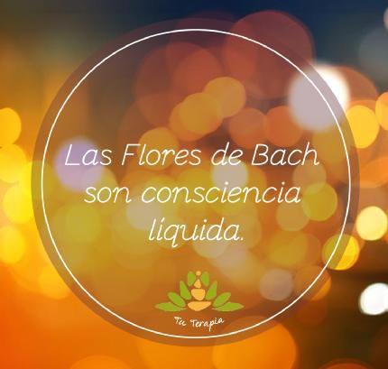Marcela Pezoa Bissières | Terapeuta en Tu Terapia y Centro Bamboo | LinkedIn