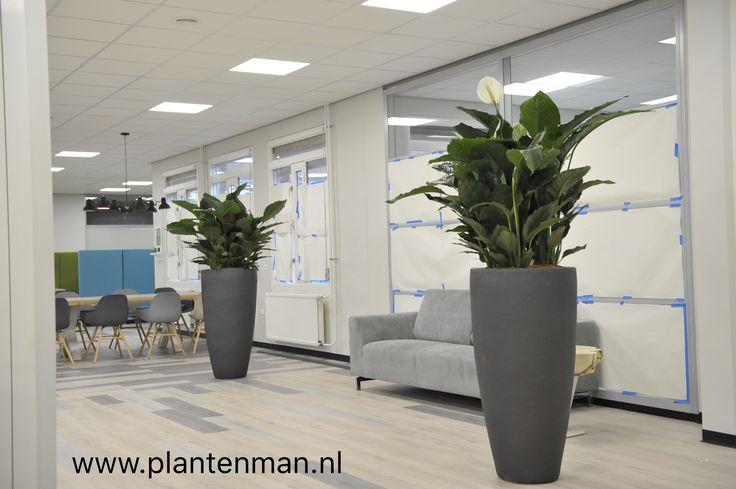 Interieurbeplanting