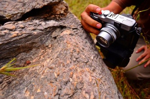 Fossil coral rocks: Visitors can also find some fossil coral rocks as proof of marine life in Rajamandala millions of ye...